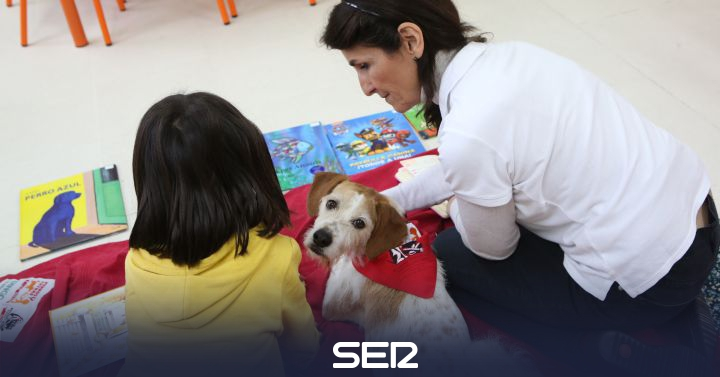 Therapy dogs to help students with learning difficulties in Tres Cantos | BE North Madrid | Time 14 North Madrid