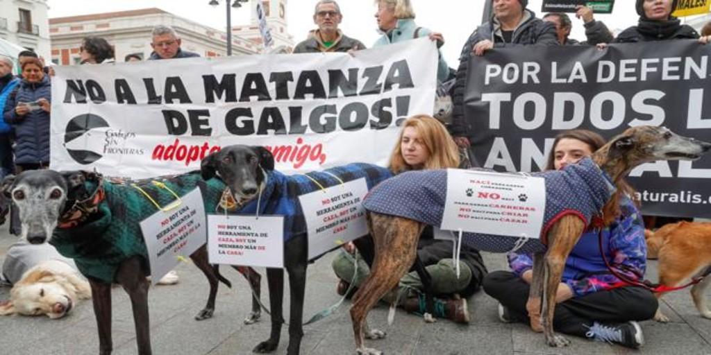 The annual greyhound lie