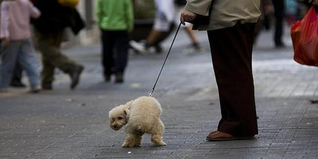Canine excrement, the biggest problem of street cleaning in Toledo