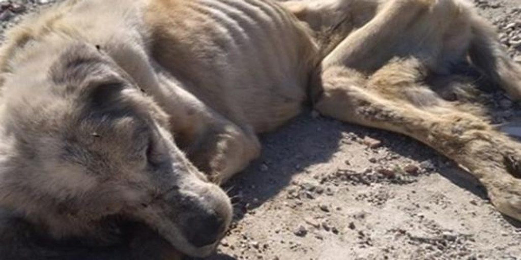 The tireless struggle to survive Ragnar, the dog rescued from the most brutal abuse