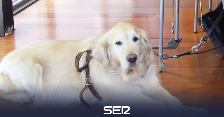 They denounce the 'expulsion' of a user with her guide dog in a shoe store in Valencia | Valencia Radio