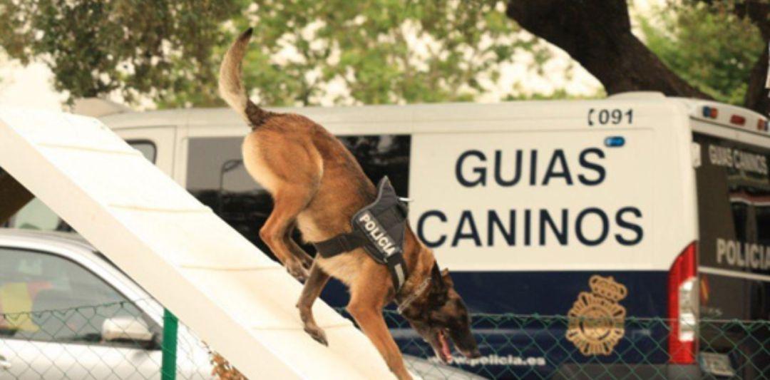 Perros que salvan vidas y a los que se busca un retiro digno