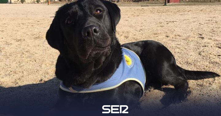 Trains a guide dog for a girl with reduced mobility, simulates her robbery and ends up arrested   Radio Madrid