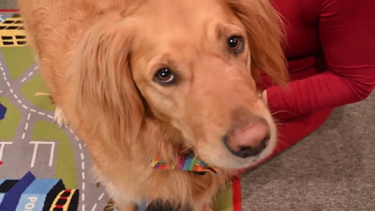 Doctor Reid, a dog that changes the lives of autistic children