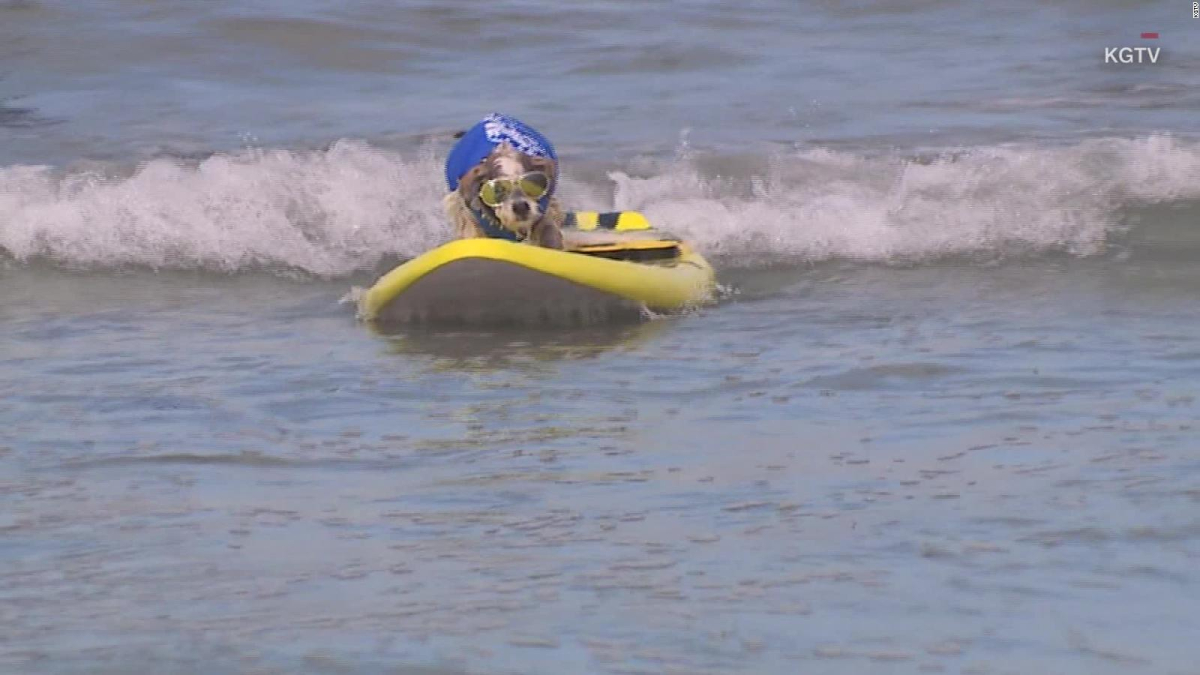 These dogs surf the waves for a good cause