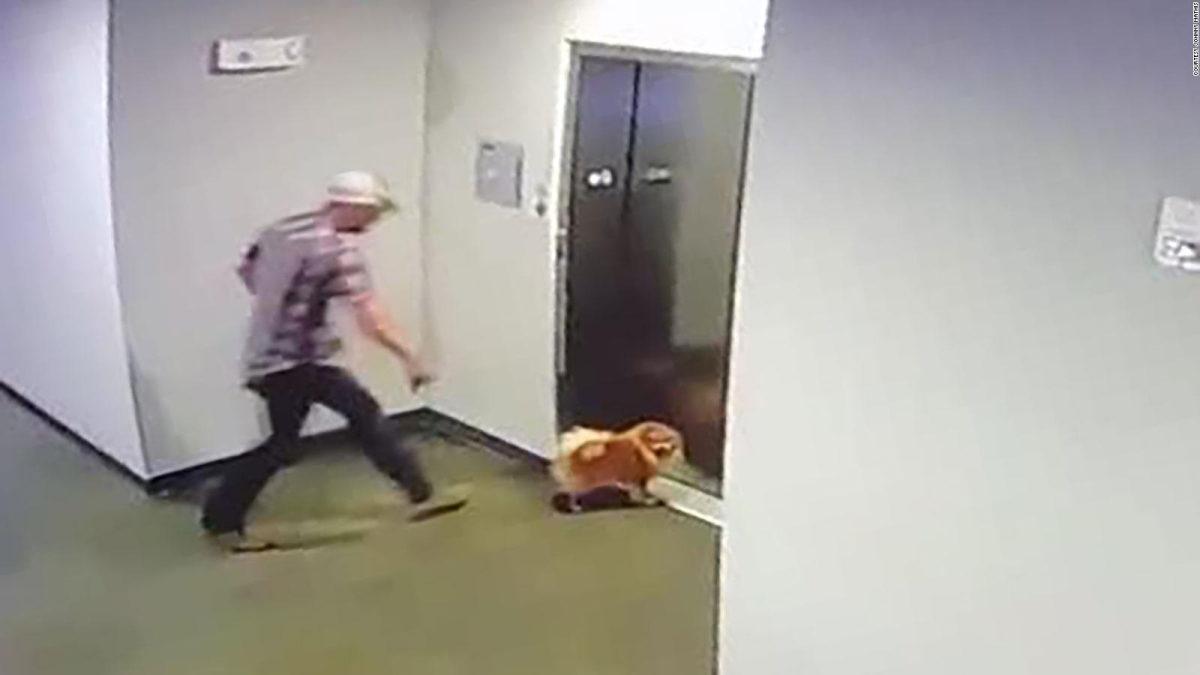 The rescue of a dog after its leash gets stuck in the elevator