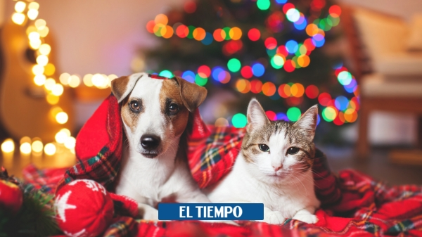 How to take care of your pet during this Christmas season? - Environment - Life