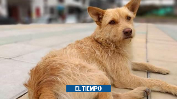 In Pennsylvania, Caldas, alarms are set for death of dogs due to poisoning - Other Cities - Colombia
