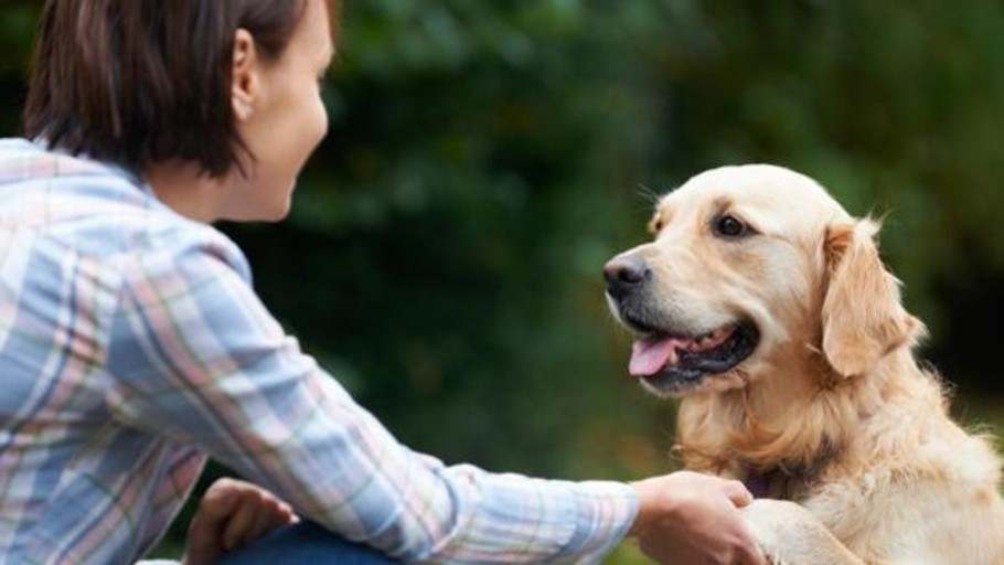 The Spaniards consider their dogs to be happier than them