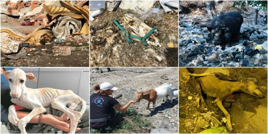 The Commissioner of the Cañada Real creates a protocol to save the animals