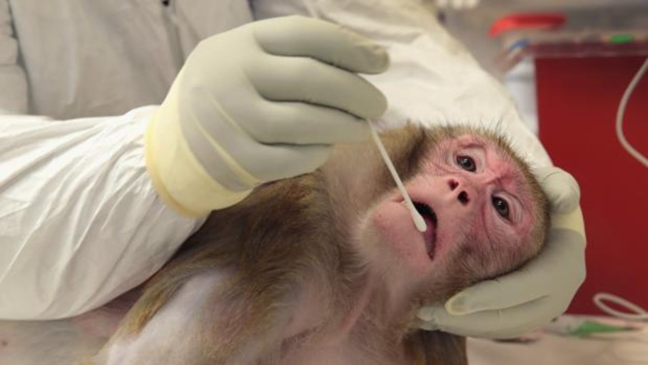 Spanish laboratories conducted 836,096 animal experiments in 2018, 33,000 more than in 2017