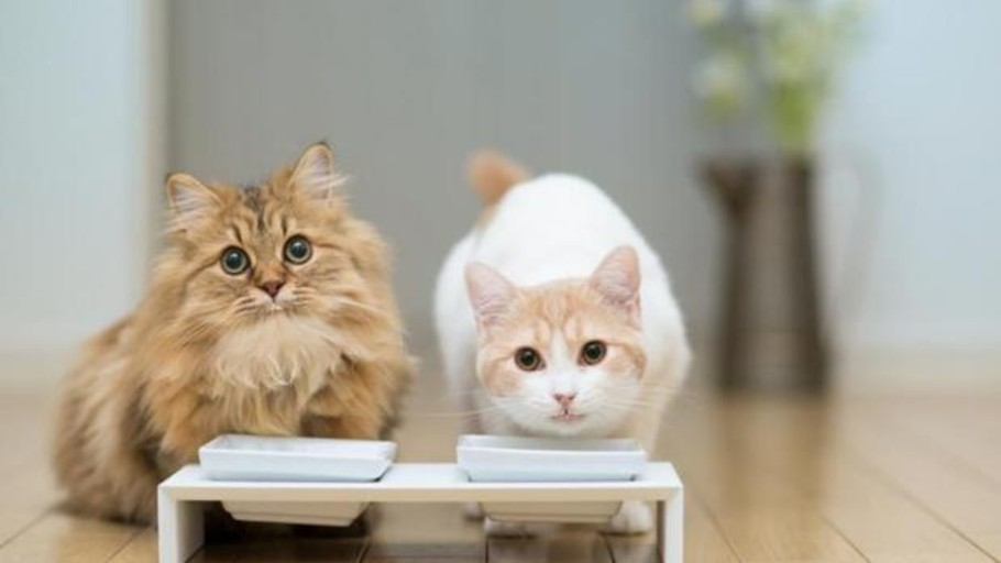 Cats loyal to a balanced diet