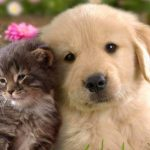 Is it cheaper to keep a dog or a cat? - Health Insurance