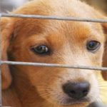Increase the number of animals bought in Spain to the detriment of those adopted - Health Insurance