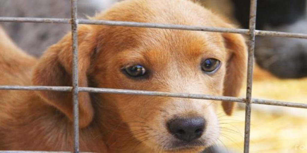 Increase the number of animals bought in Spain to the detriment of those adopted