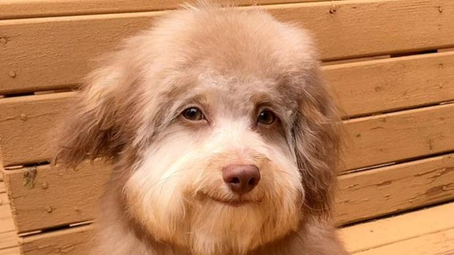 Nori, the amazing dog with a human face