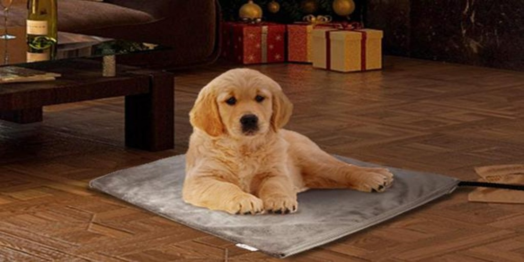 «Perrichristmas» and be careful what our pets eat