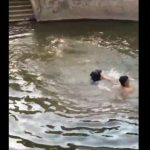 A man pretends to drown and his dog jumps into the water to save him - Health Insurance