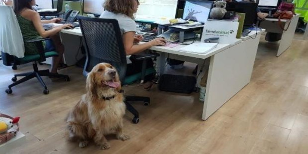 Is it beneficial to take our dog to the office?
