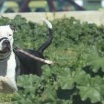 Two and a half years in prison for the owner of four dogs that killed a man in Salamanca - Health Insurance