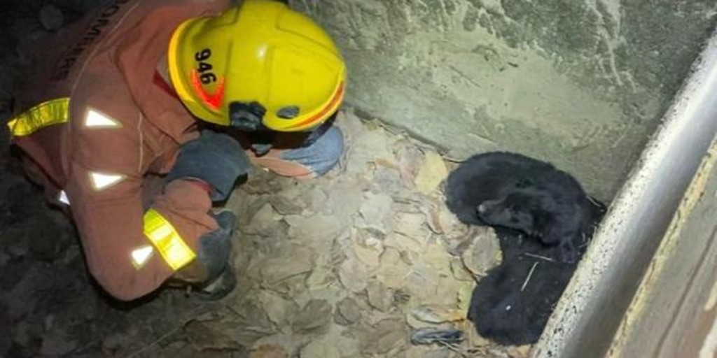 Firefighters rescue two dog puppies from a ditch catcher