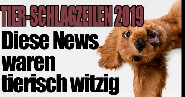 Kuh Büxi, puppy Mojio, whale as a spy: THIS 2019 headlines were bizarre