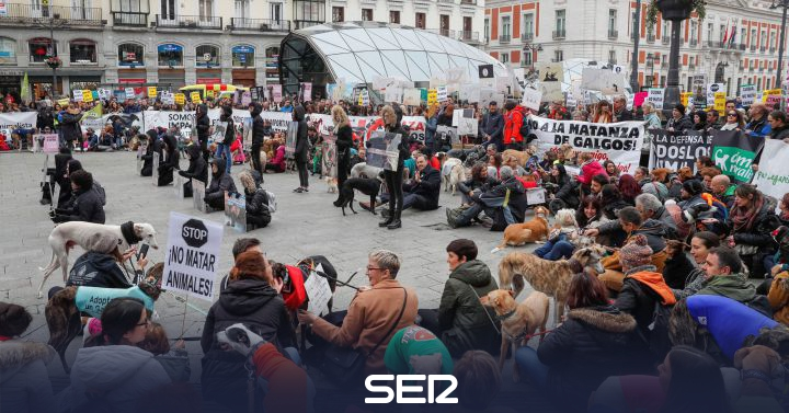 Thousands of people demonstrate throughout Spain by a law that protects the dogs used for hunting | Society