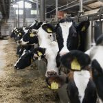 Fewer livestock ensures less nitrogen and phosphate in manure - Insurance for Pets