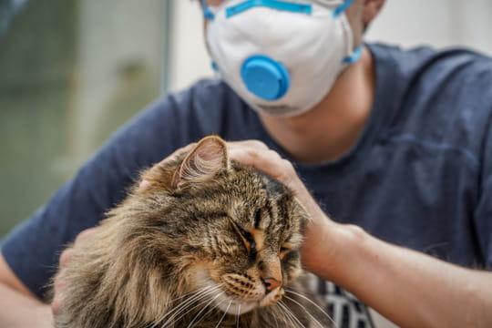 Animaux et coronavirus: peuvent-ils contaminer leurs propriétaires?