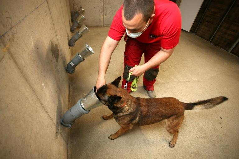 In Ajaccio, dogs trained to detect a possible odor from the Covid-19