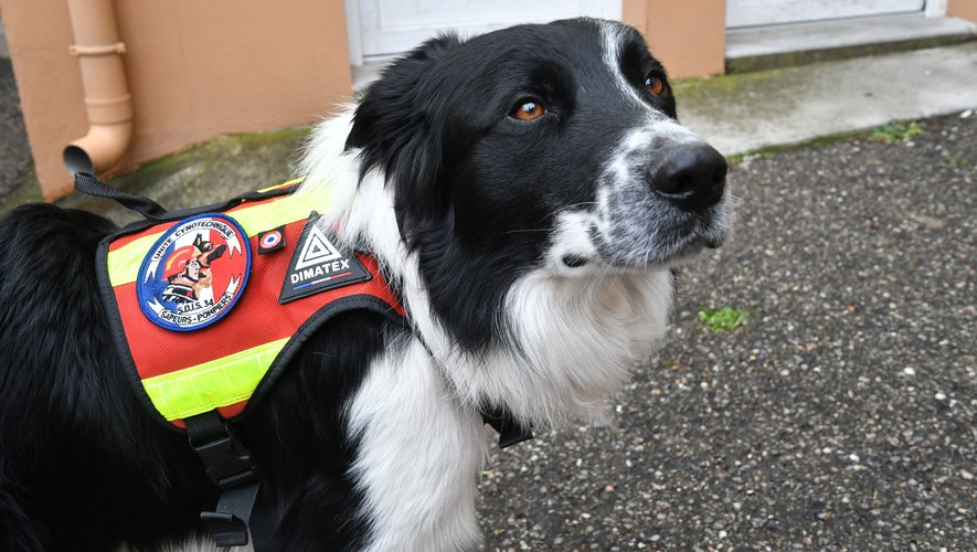 Covid-19: dogs to detect carriers of the virus thanks to their scent