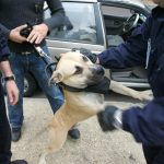 dogs capable of detecting positive people - Insurance for dogs