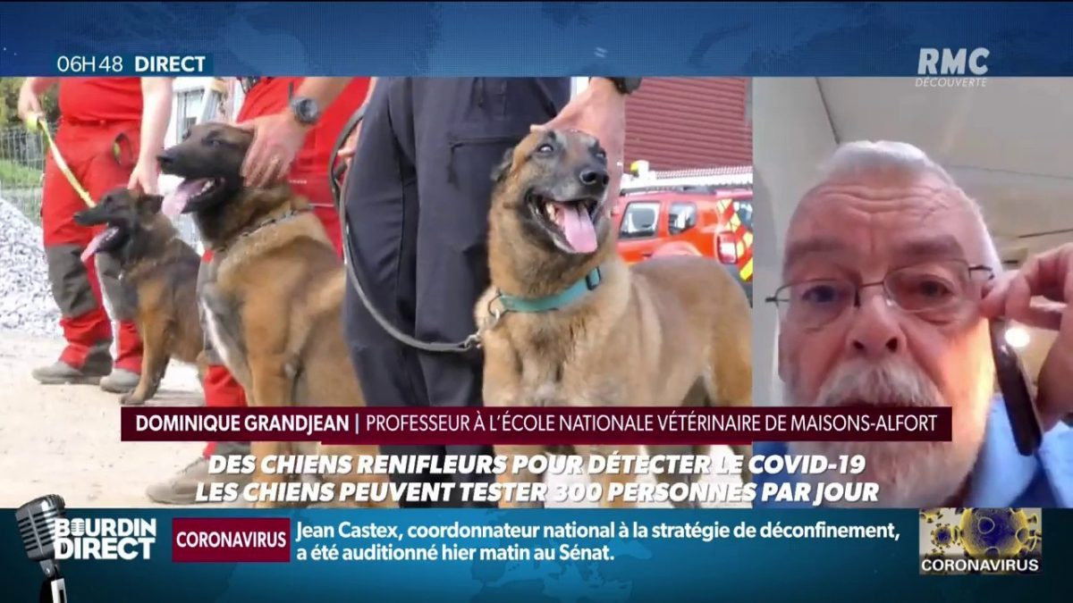 At Maisons-Alfort, dogs trained to detect coronavirus in humans