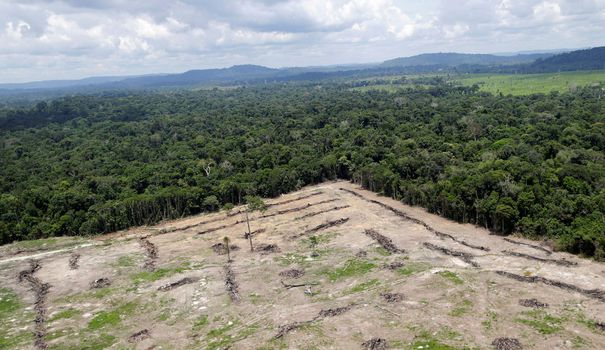 The link between deforestation and the emergence of infectious diseases remains too little understood