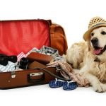 Traveling to Spain with pets - Insurance for Pets