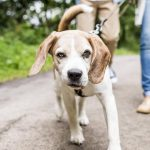 New rules for dog owners: you need to know now - Insurance for Pets