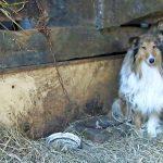 Das Internet verführt zum illegalen Tierhandel - Insurance for Pets