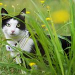 Top Best GPS Cat Collars - Insurance for Pets