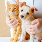 How does dog / cat health insurance work? - Insurance for Pets