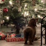 So sweet!  These Leiden pets are completely in the Christmas spirit - Insurance for Pets