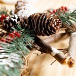 Decorative holiday plants: Beware of ingestion! - Insurance for Pets